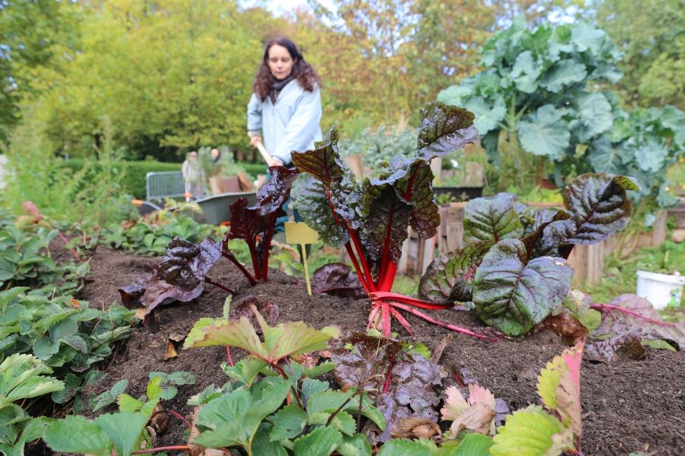 transition-minett-urban-gardening-51